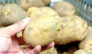5 thực phẩm phổ biến có thể gây nguy hiểm cho sức khỏe