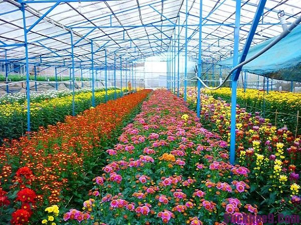 Làng hoa lâu đời nổi tiếng nhất Đà Lạt