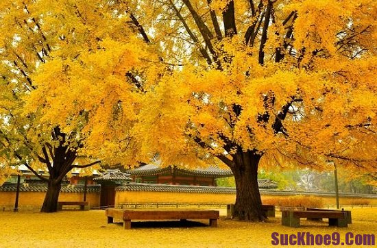 Du lịch Hàn Quốc mùa nào đẹp nhất? Thời điểm lý tưởng nên du lịch Hàn Quốc
